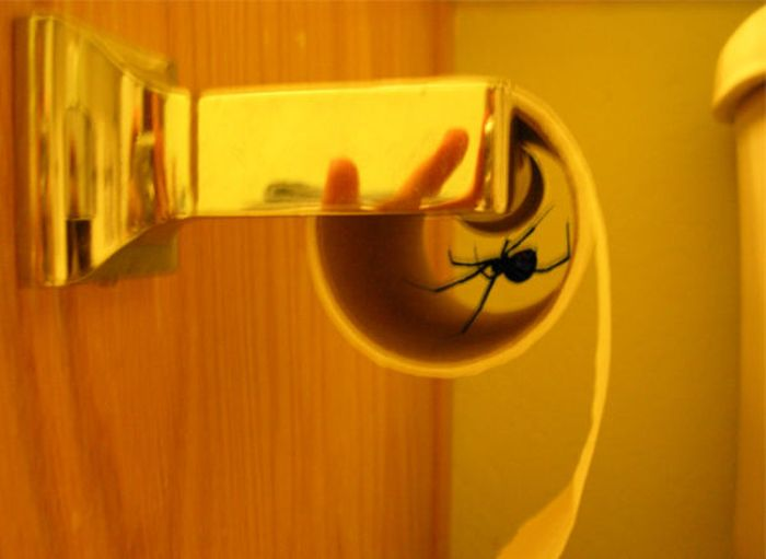 There's A Whole Lot Of Nope In Here (50 pics)