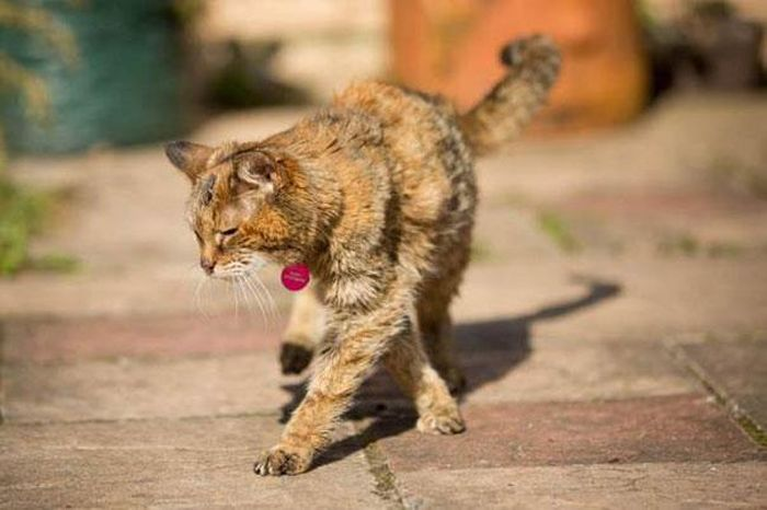 Get Ready To Meet The World's Oldest Cat (14 pics)