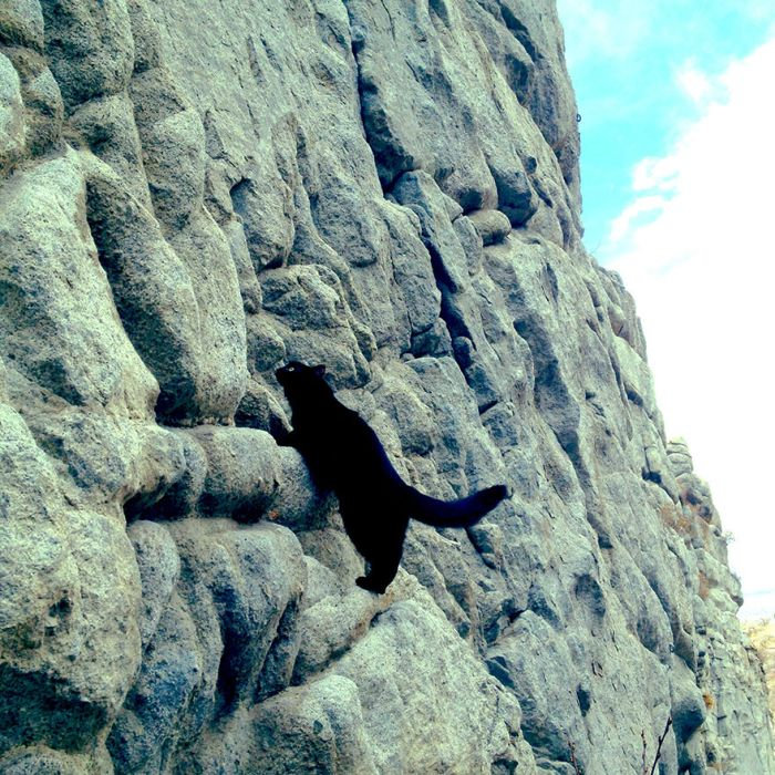 This Cat Climbs Mountains Like A Boss (21 pics)