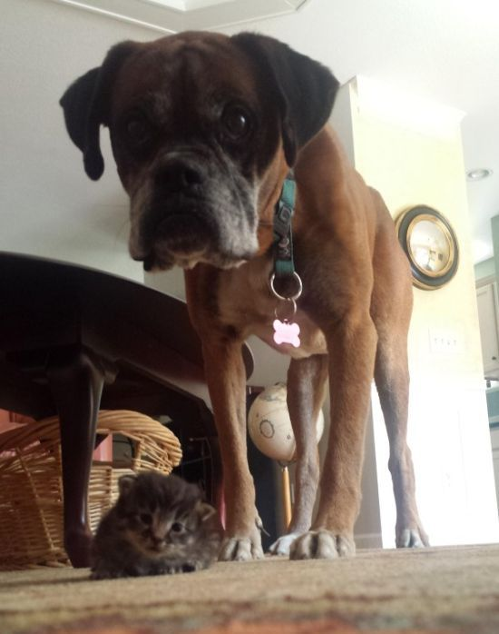 This Dog And Cat Became Besties Pretty Quick (6 pics)