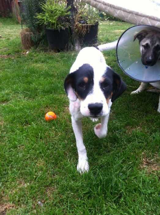 Watch This Rescue Dog's Road To Recovery (24 pics)