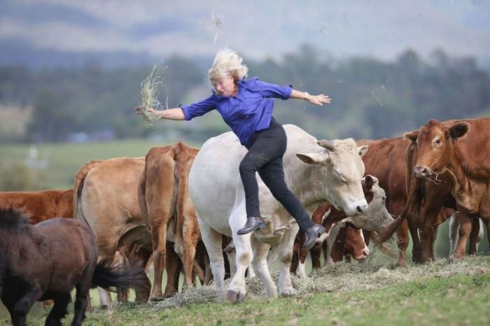 This Woman Gets Owned By A Bull (5 pics)