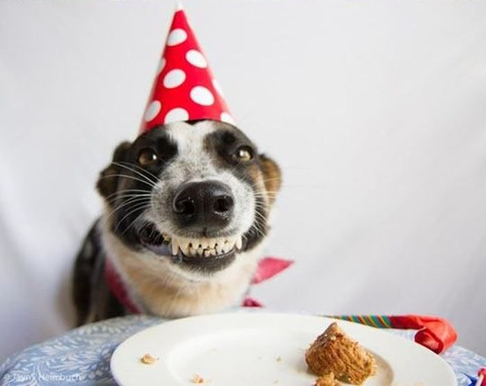 Is This The Happiest Dog Ever? (2 pics)