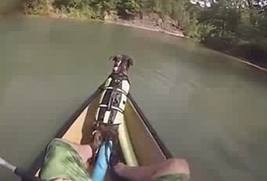 Dog Falls Out Boat During Rafting