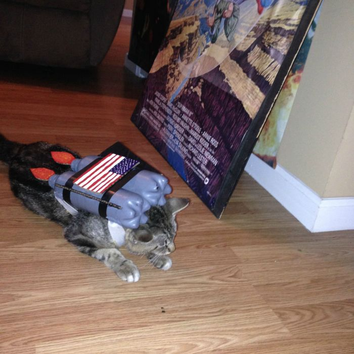 Nothing Says Cool Like A Cat With A Jetpack (11 pics)