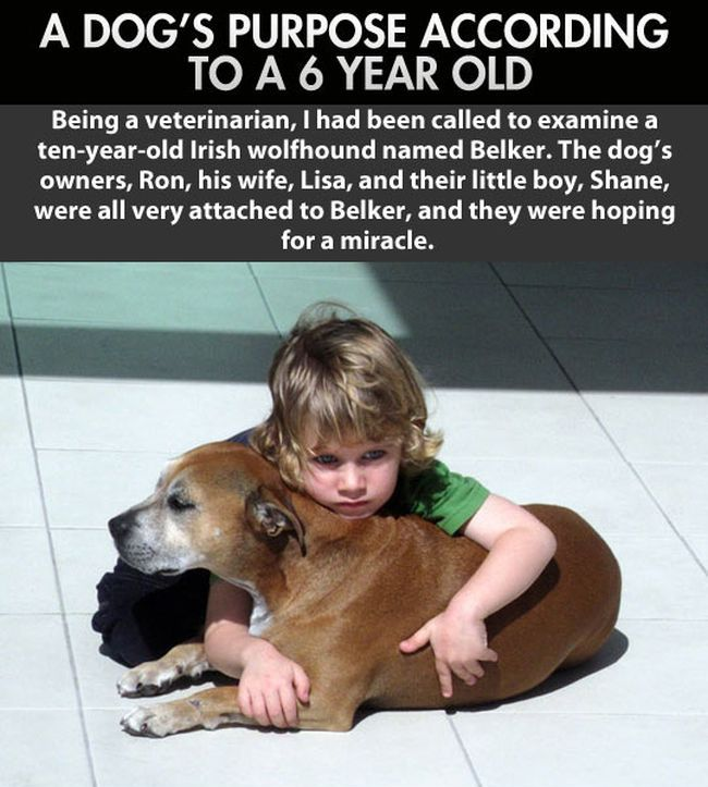 Kid Explains Why Humans Live Longer Than Dogs (2 pics)