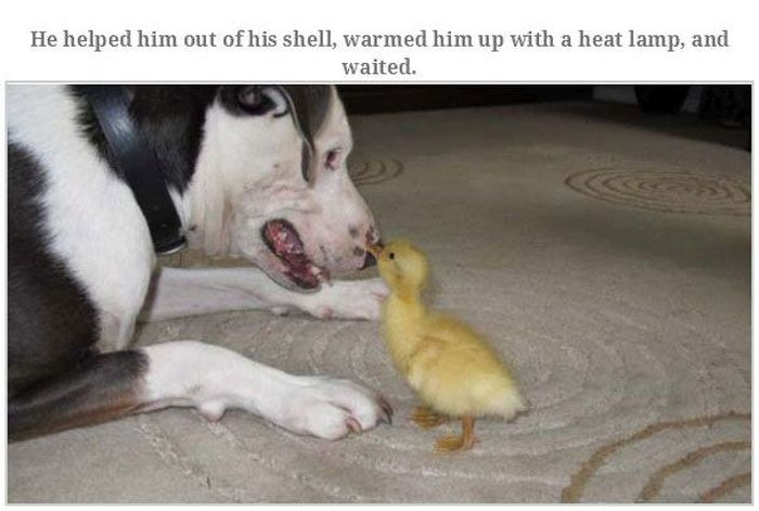 Meet The Duck That's Named Goose (15 pics)