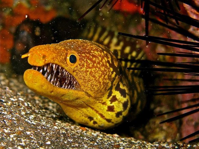 These Eels Will Haunt Your Dreams (5 pics)