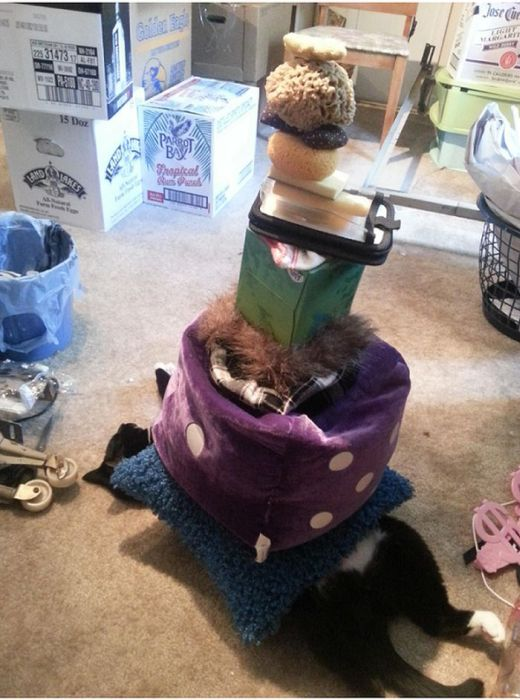 How Many Items Can You Stack On A Lazy Cat (9 pics)