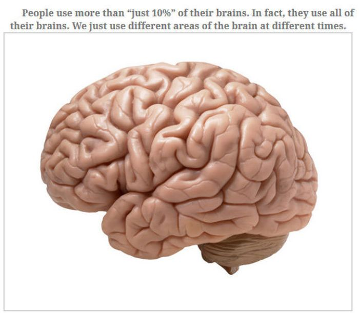 Feed Your Brain With These Awesome Facts (35 pics)