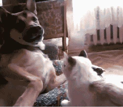 When Cats Attack! (34 gifs)