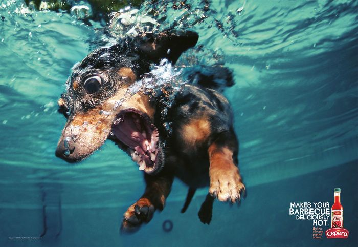 These Animals Take These Print Ads From Boring To Epic (55 pics)