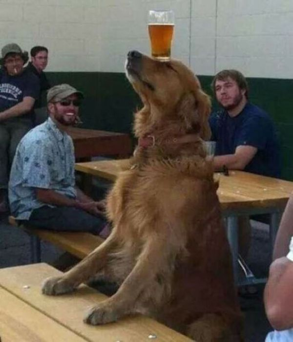 Animals Who Do What They Want (41 pics)