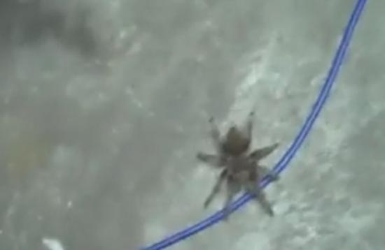 Epic Spider Prank Gone Wrong