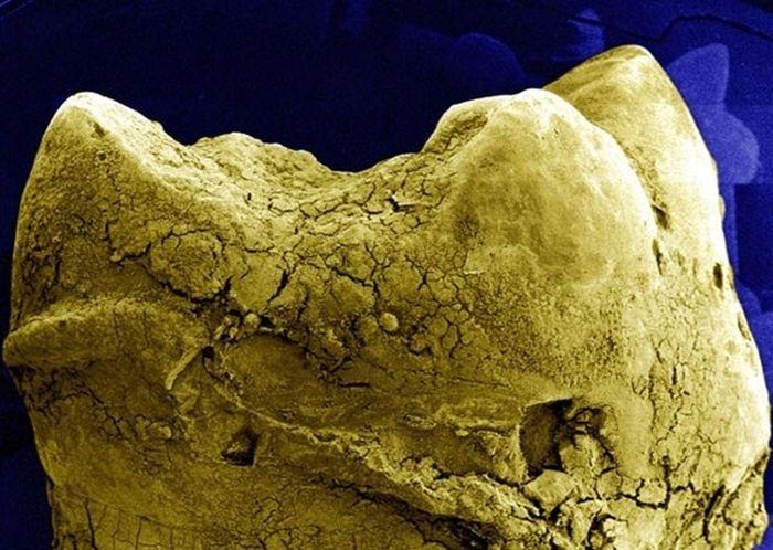 Random Things Through An Electron Microscope (21 pics)