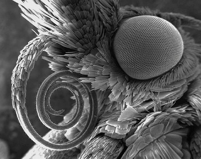 Random Things Through An Electron Microscope (21 pics)