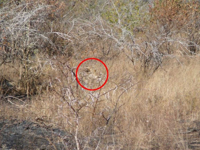 Can You Find These Camouflaged Animals (38 pics)