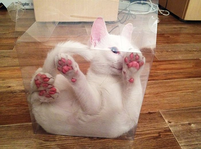 This Poor Cat Is Trapped In A Box (8 pics)