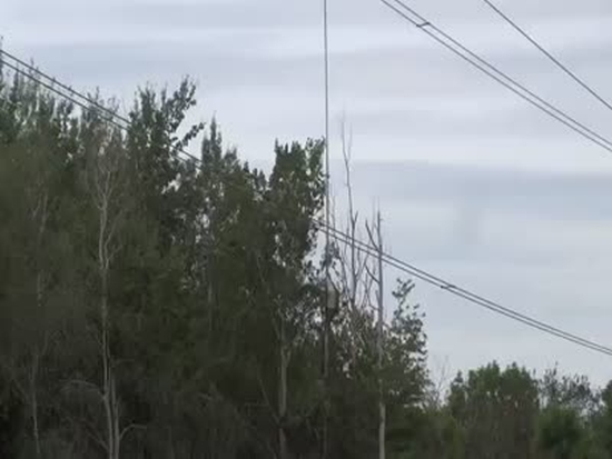 Cutting Trees Near Power Lines
