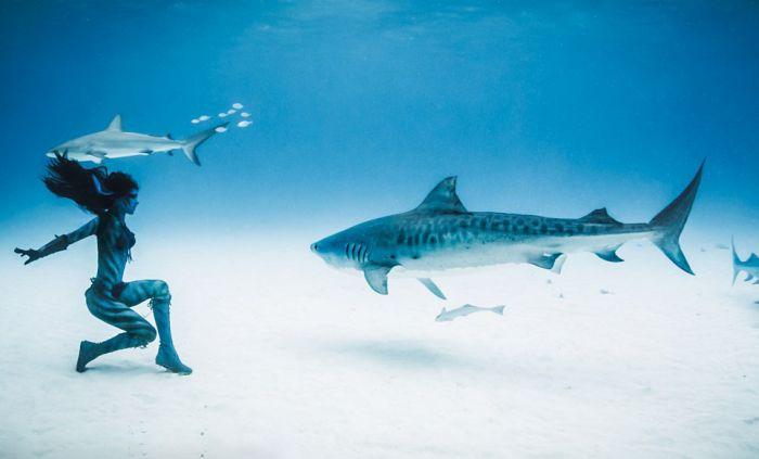 Amazing Underwater Photoshoot With A Shark (13 pics)