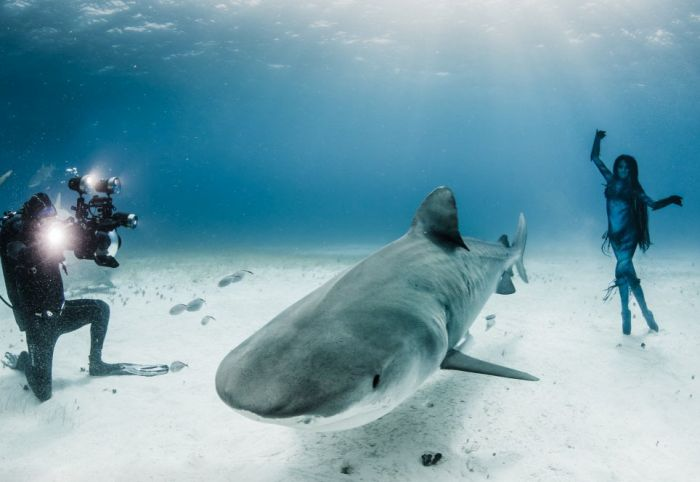 Amazing Underwater Photoshoot With A Shark (13 pics)