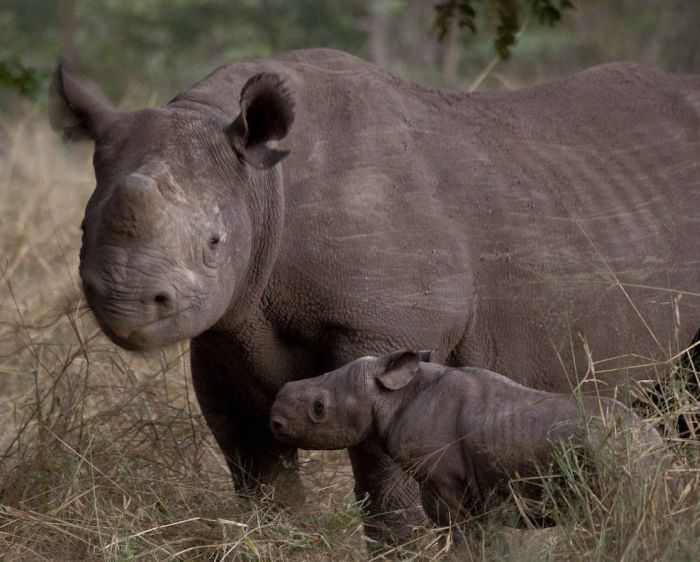 This Is How You Fight Poachers (16 pics)