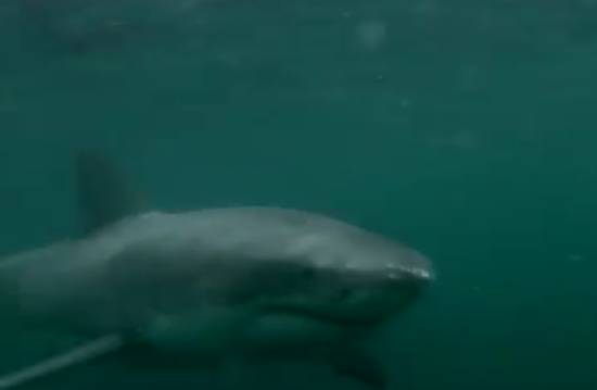 Unexpected Encounter With A Shark