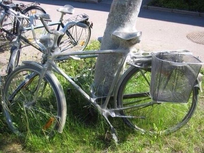 This Bike Now Belongs To The Bugs (7 pics)