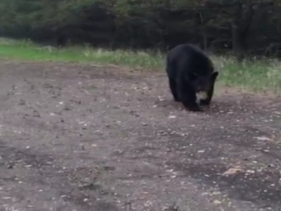 Two Runners And A Black Bear In Canada