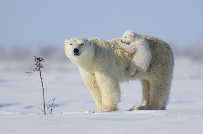 The Most Epic Animal Pictures Ever (41 pics)