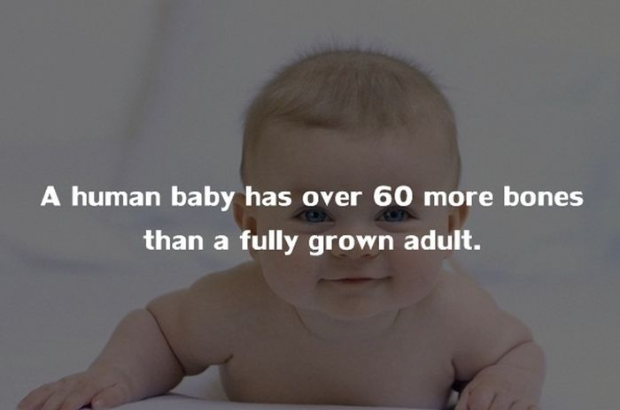 Crazy Things You Didn't Know About The Human Body (20 pics)