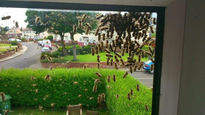 The Bees Are Taking Over The House (17 pics)