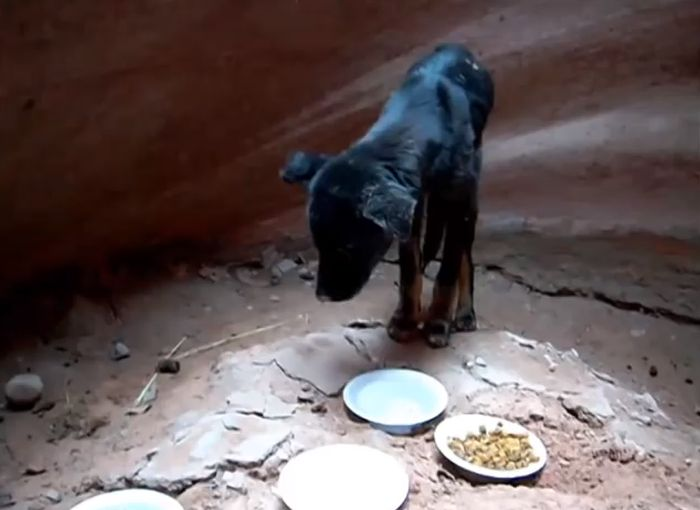 Puppy Gets Rescued From A Canyon (10 pics)