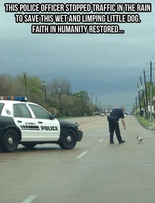 Proof That Animals And Humans Need Each Other (26 pics)