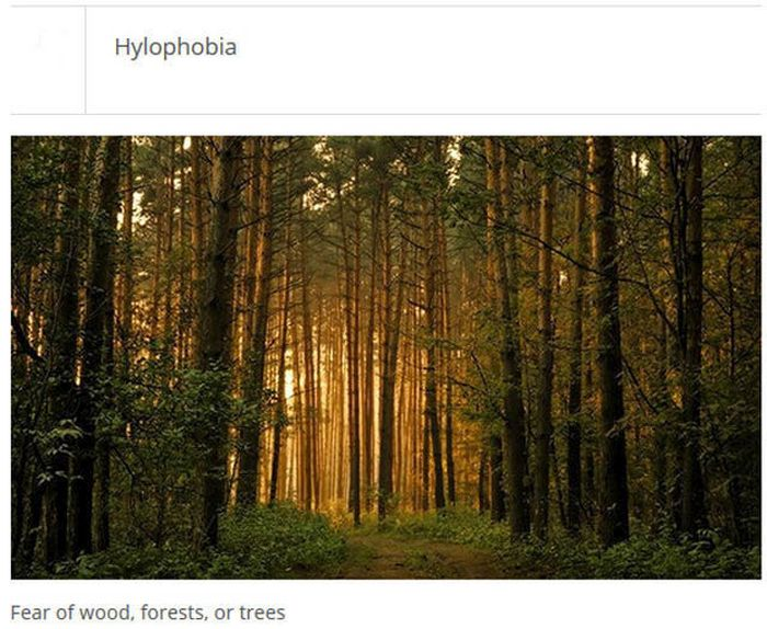 The Weirdest Phobias That People Actually Have (25 pics)