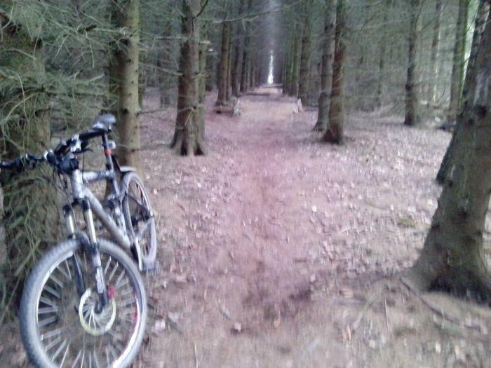 Who Would Put A Tripwire On A Bike Trail? (4 pics)