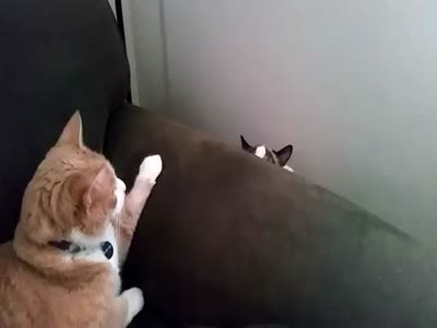 Cats Meet Each Other For The First Time