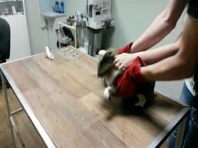 It's Not Easy To Vaccinate A Cat