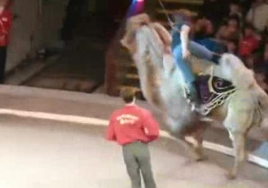 Hilarious Circus Fail