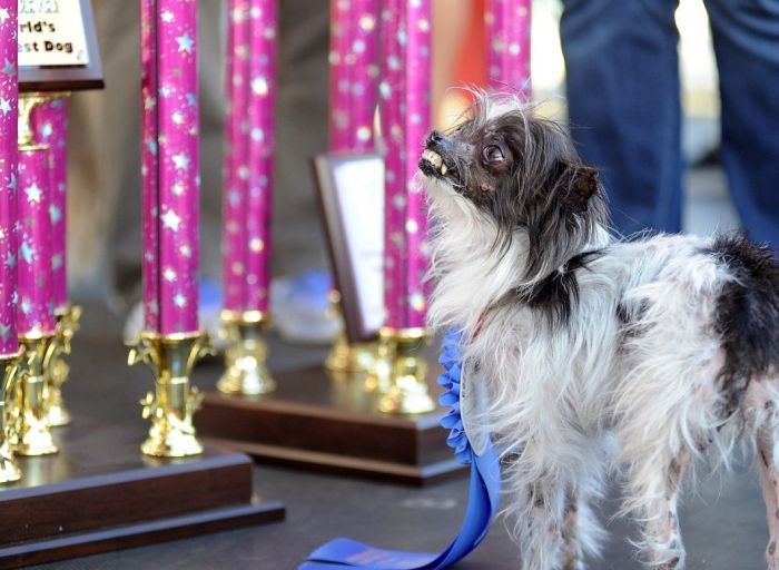 This Dog Won A Ribbon For Being Ugly (6 pics)