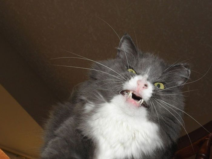 Cats Going Derp For Days (25 pics)