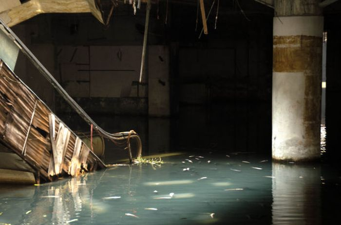 Look Who Moved Into This Abandoned Mall (15 pics)