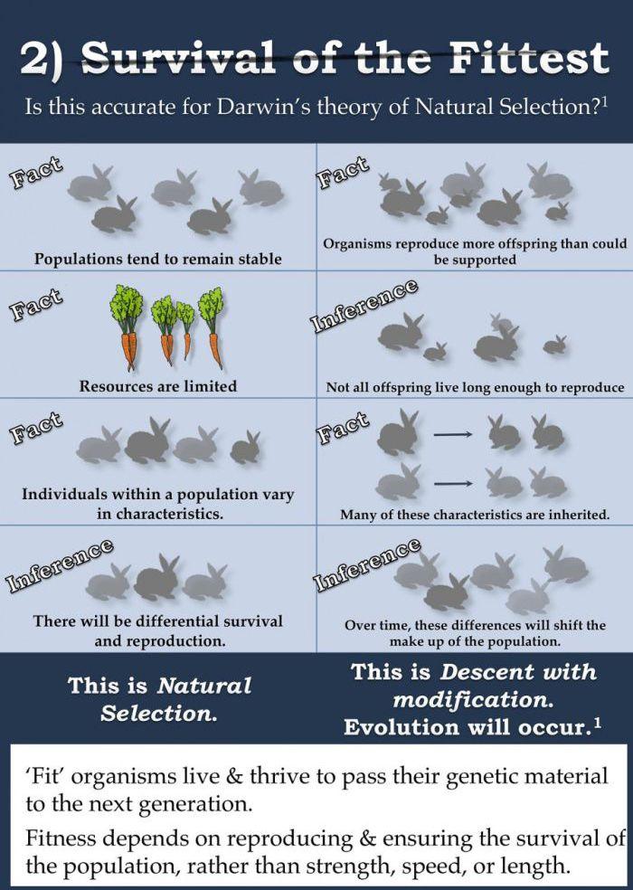 The Evolution Argument Continues (7 pics)