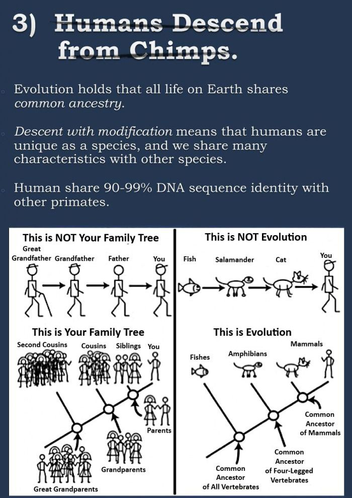 The Evolution Argument Continues (7 pics)