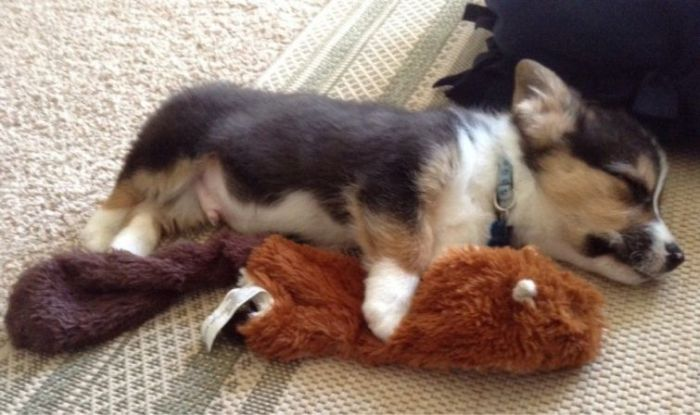 These Puppies Will Kill You With Cuteness (46 pics)