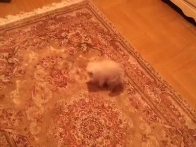 Kitten Scared Of The Carpet