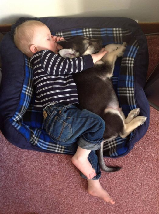A Dog Is Your Kid's Best Friend (29 pics)