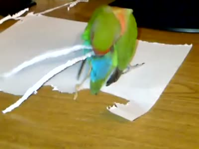 Parrot Tries To Make Its Tail Longer