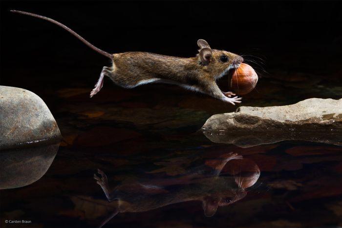 Simply Stunning Wildlife Photos (50 pics)