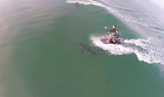 Close Call Surfing Near A Shark